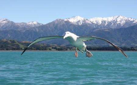 Encounter Kaikoura/Jo Thompson