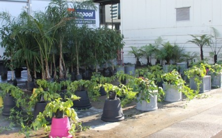 Supplier plants